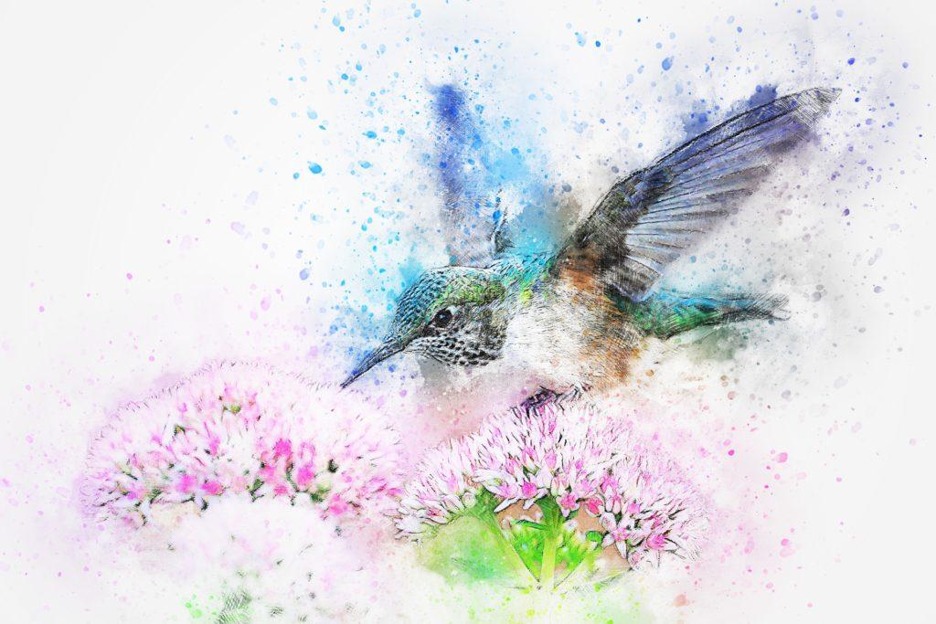 akwarela ptak koliber malowanie