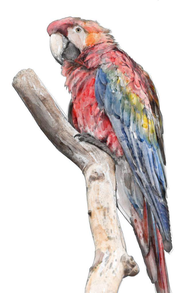 malowanie akwarelą ptaki papuga ara